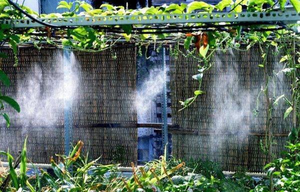 Hệ thống phun sương cho vườn