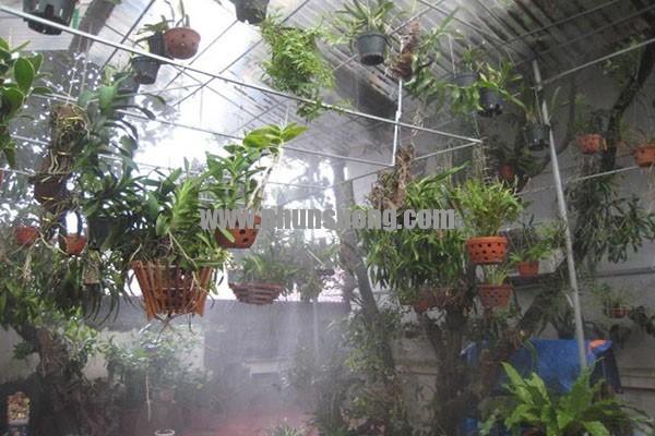 Phun sương Hawin được sử dụng cho vườn lan tại Thái Nguyên