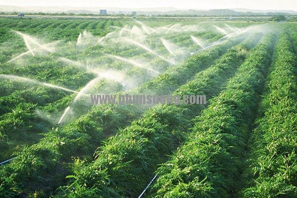 Phun sương Hoàng Hà dùng trong trồng rau ở Tây Ninh